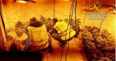 La Guardia Civil detiene a un vecino de Oropesa y desmantela un cultivo con 75 plantas de marihuana