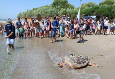 La tortuga Colomera ha recorrido más de 400 kilómetros en nueve días