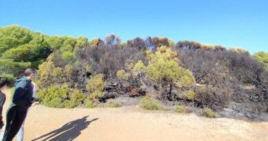 Un incendio quema árboles y matorrales en la Renegà de Oropesa